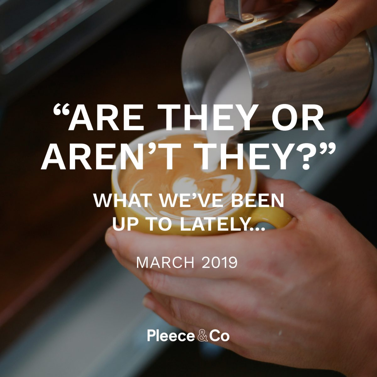 """Are they or aren't they?"" What we've been up to lately…  Pleece & Co March 2019"